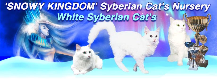 Питомник белых сибирских кошек Снежное Королевство